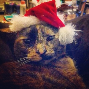 Exhibit A: Daisy (Cat B)