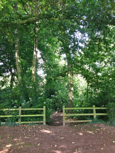 'Alma saw she was near to a gap between two oak trees, beyond which she knew was a track that would take her to the end of the park and home.'