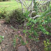 Bernard Bresslaw's grave
