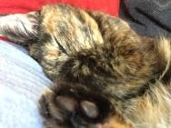 Little toe beans