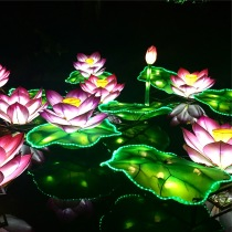 Gorgeous lily pads