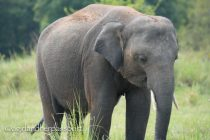 Elephant spotting in Sri Lanka