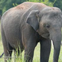 Elephant spotting in Sri Lanka