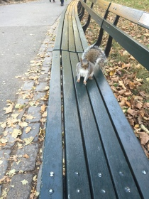A friendly squirrel - I called him Arthur. He looked like an Arthur.