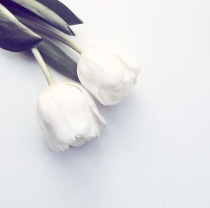 tulips flat lay