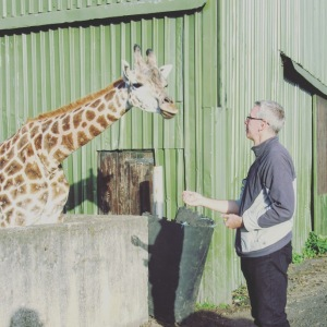 The West Midland Safari Park Giraffe Experience