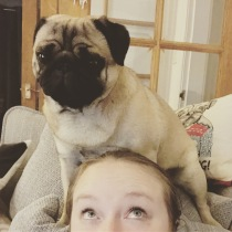 Getting re-acquainted with Dougal, the pug with no boundaries
