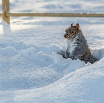 The Bloke's winning squirrel pic