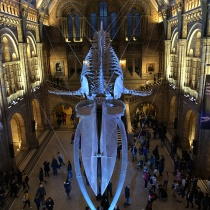 Natural History Museum (3)